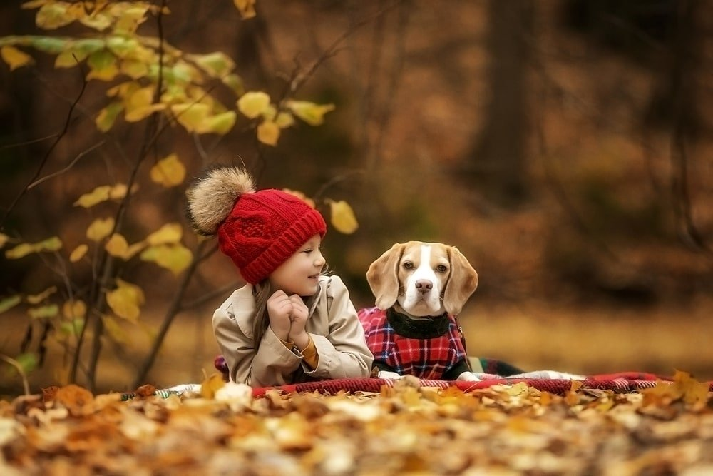 A beagle sitting with a girl