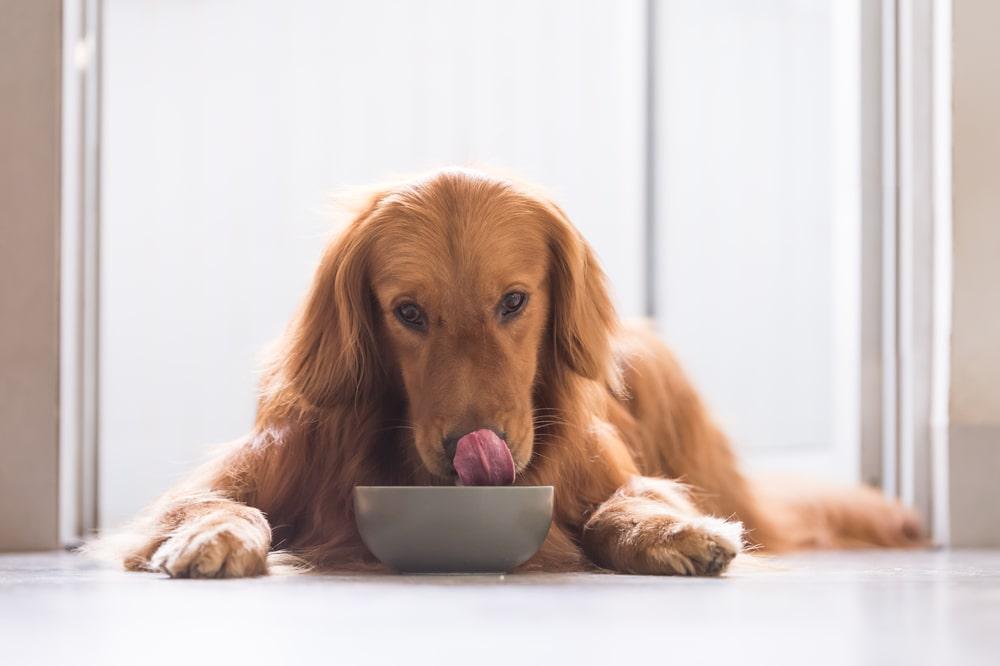 A woman feeding her dog