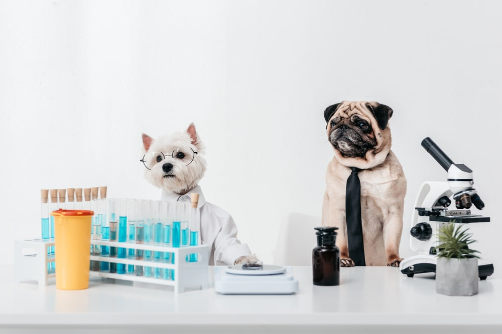 A dog wearing a stethoscope
