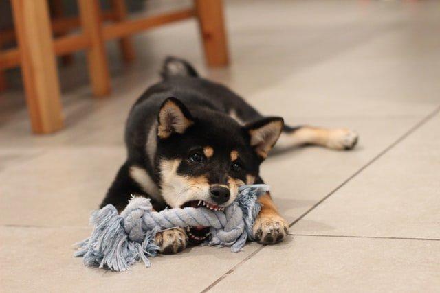 Dog biting