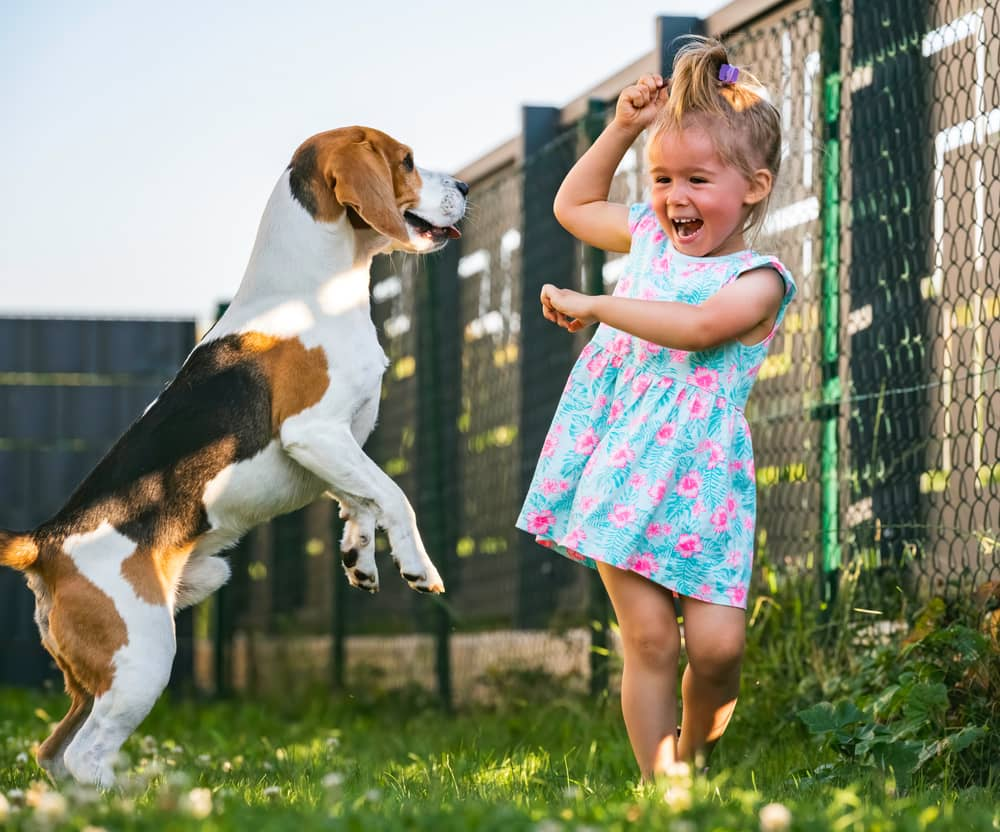 Girl Playing with a Beagle
