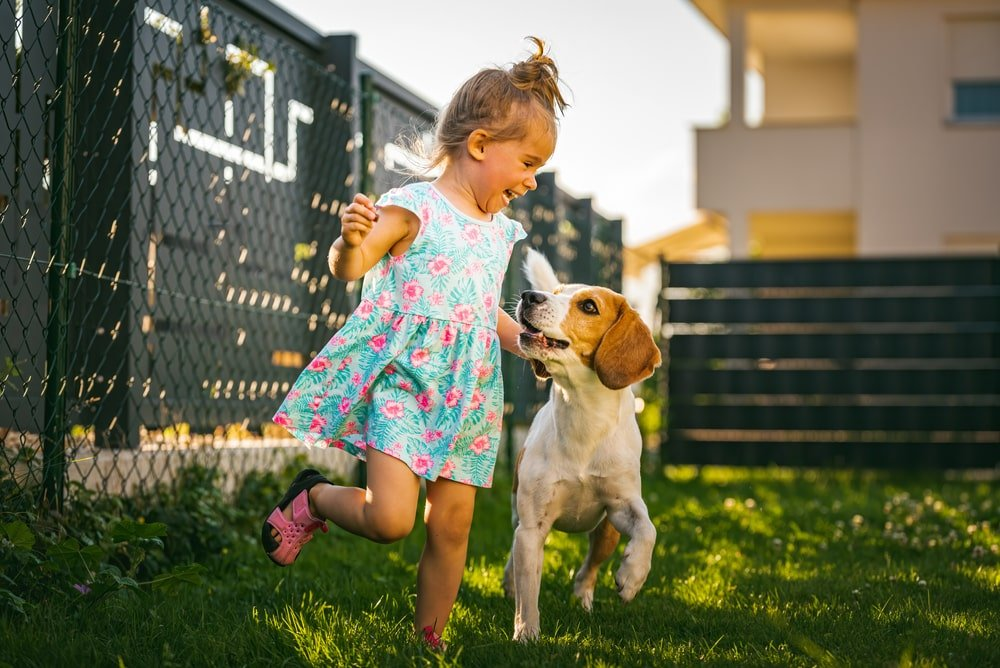 A girl playing with her beagle