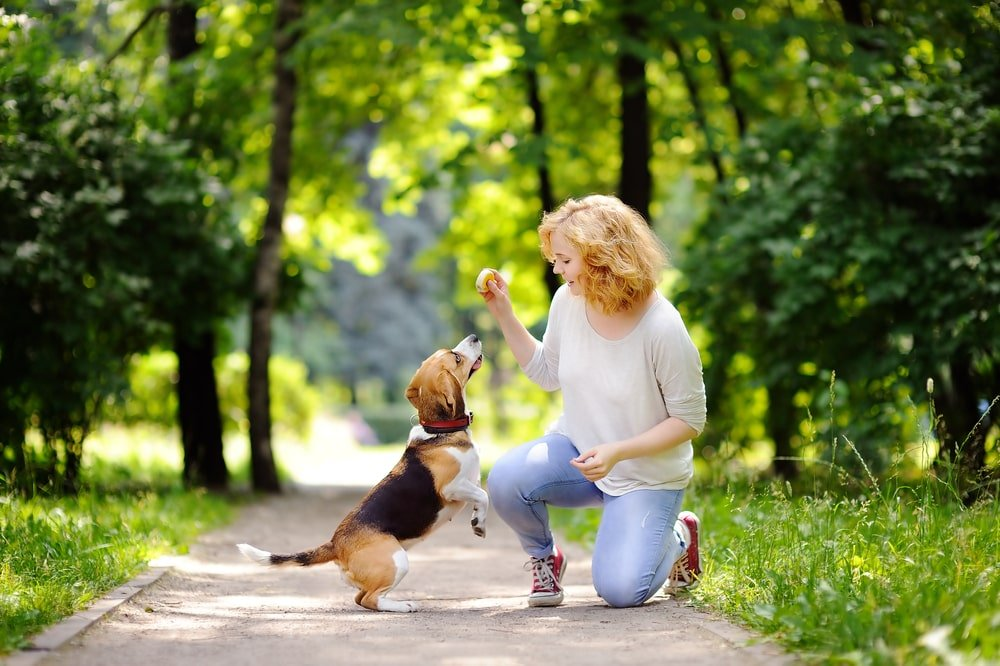 A woman with her Beagle at the park