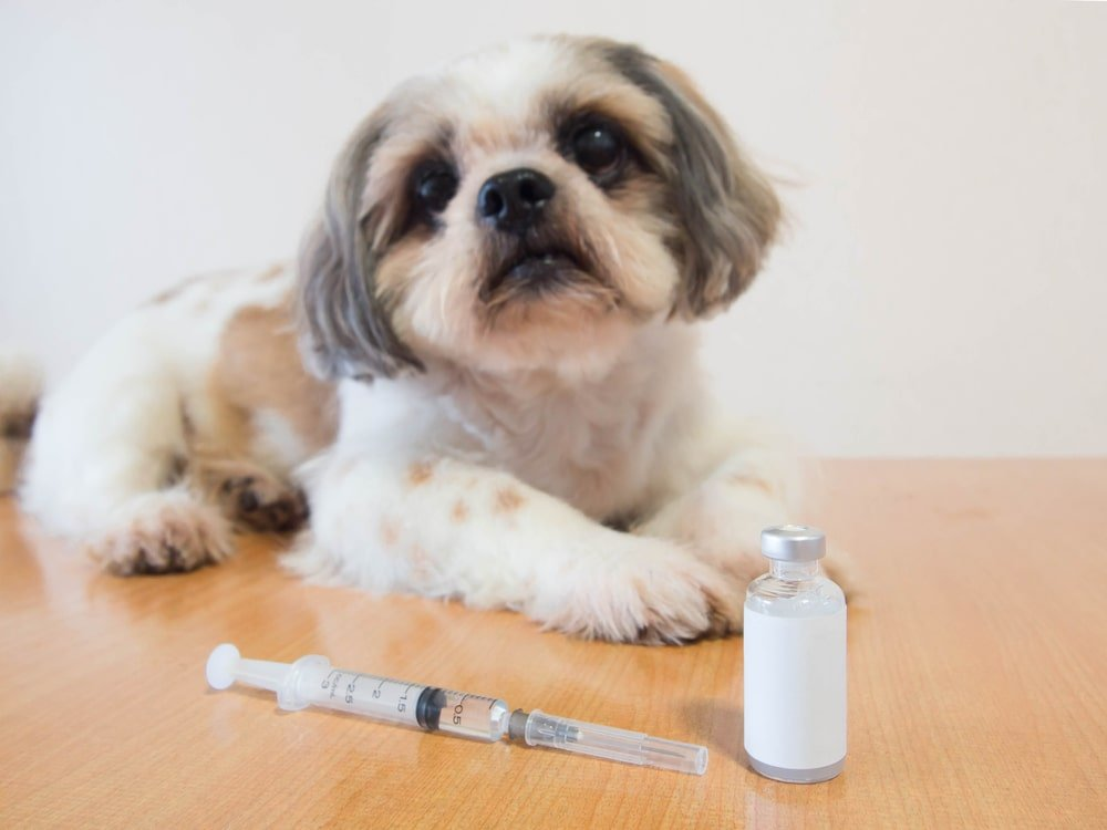 Dog Sitting with Injection
