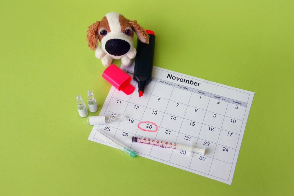 Dog Sitting with Calendar and Injection