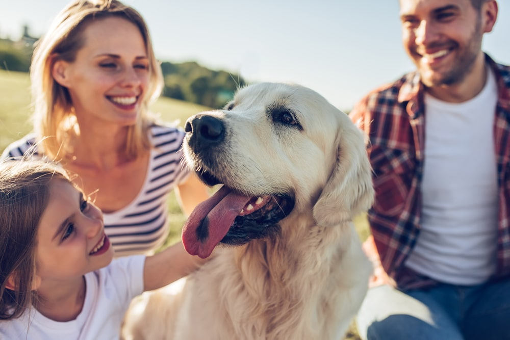 A family with their dog at the park