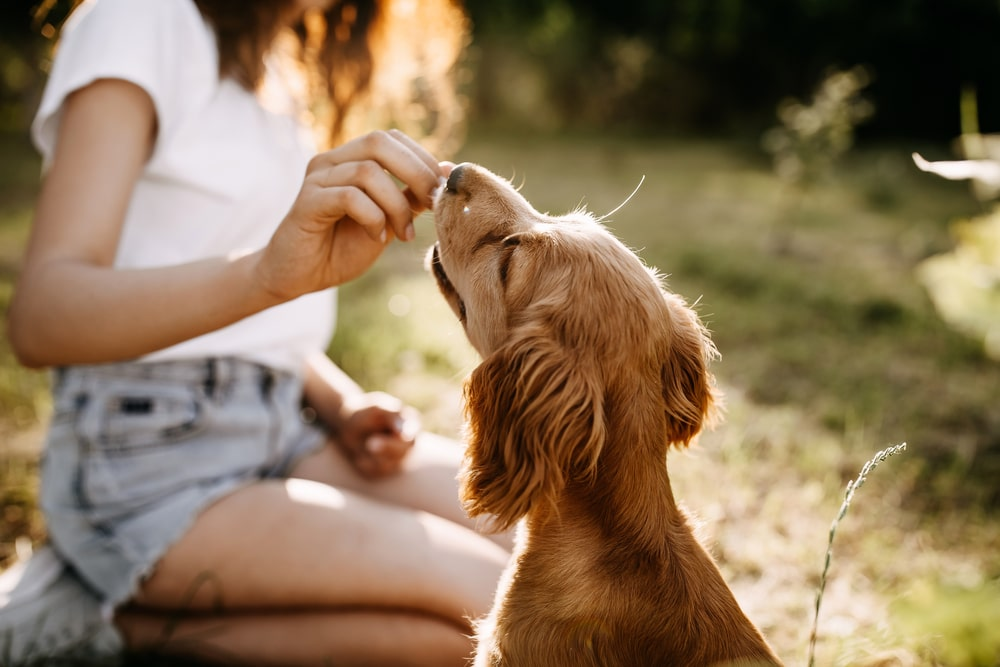 A woman training her dog and giving him treats