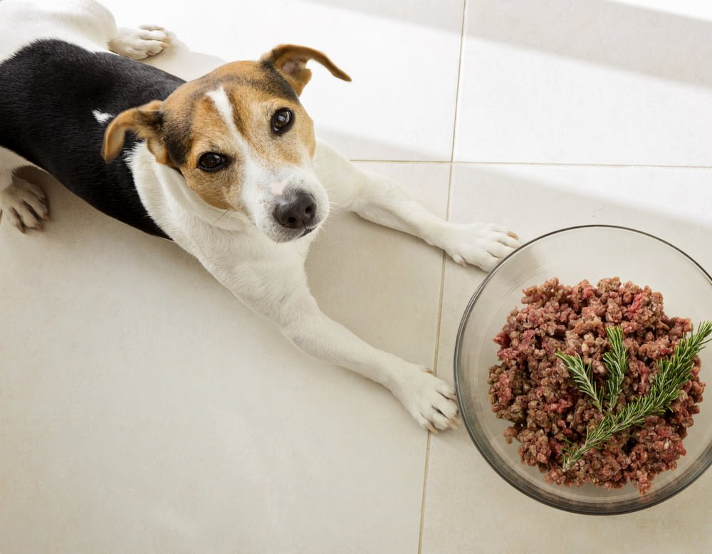 Dog Looking at Bowl of Minced Beef