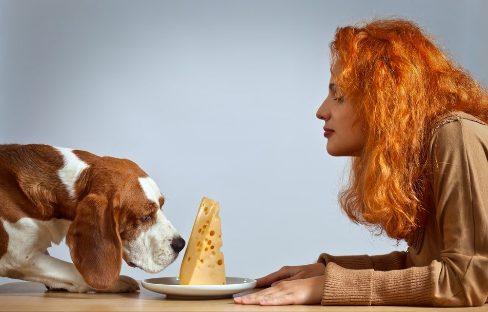 Woman Offering Dog Cheese