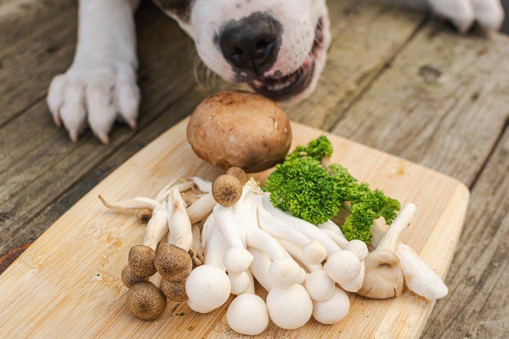 Dog Looking at Mushrooms