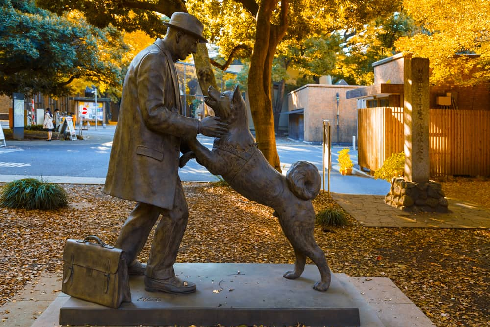 A statue of Hachiko, the dog that waited.