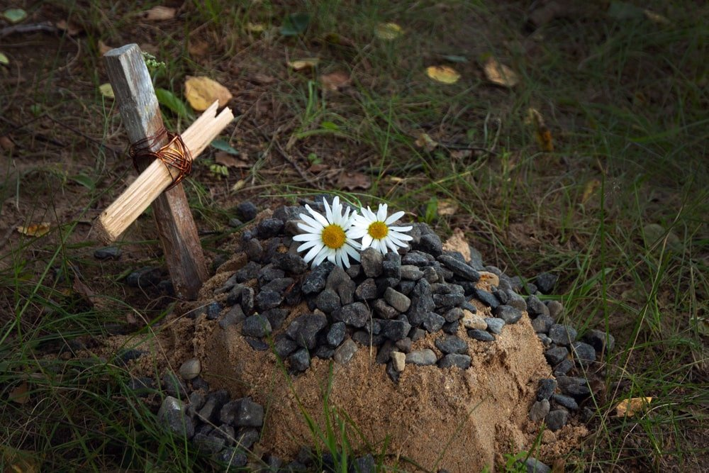 A burial of a pet with flowers on top of it