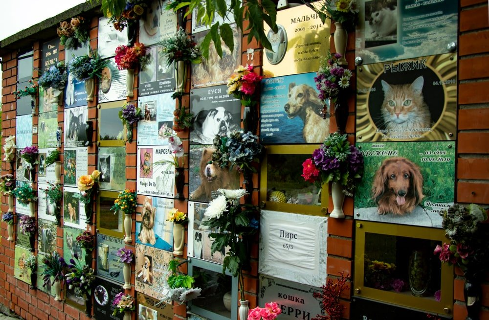 Pictures of dead pets hung on a wall to remember them.