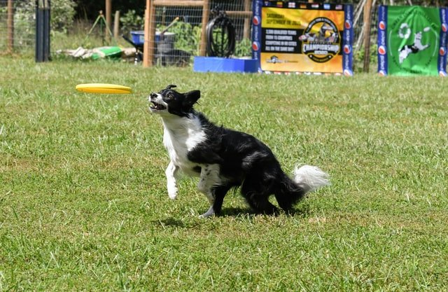 dog catch game