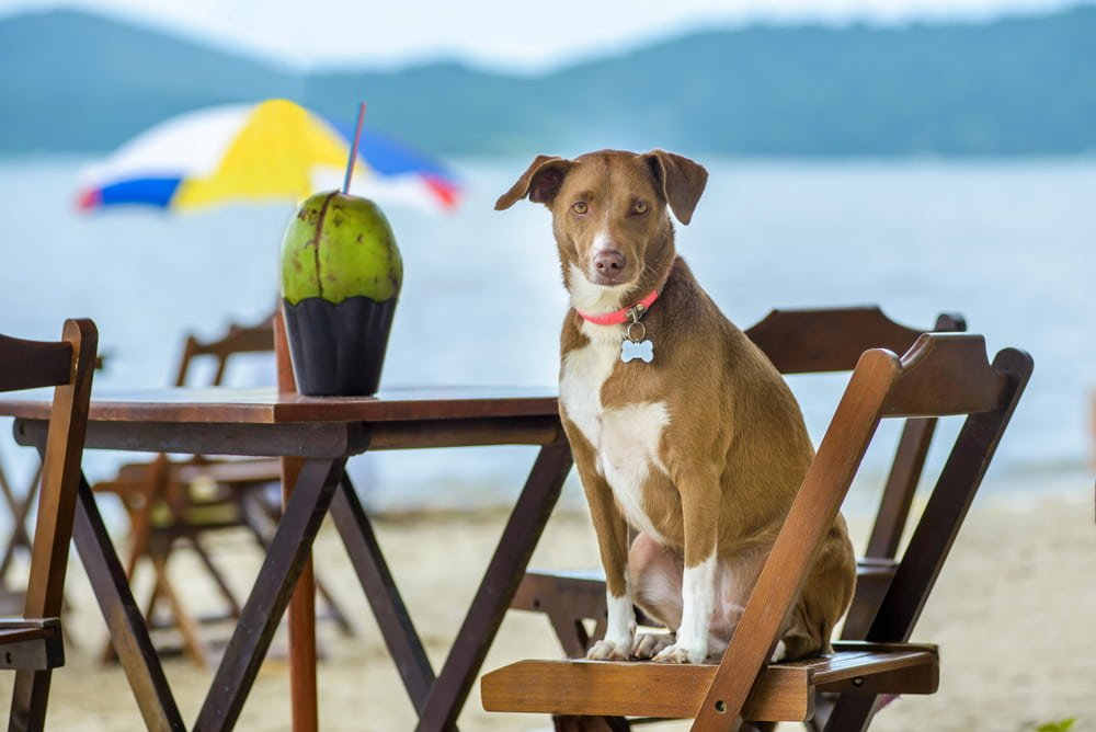 dog sitting on the chair at the beach