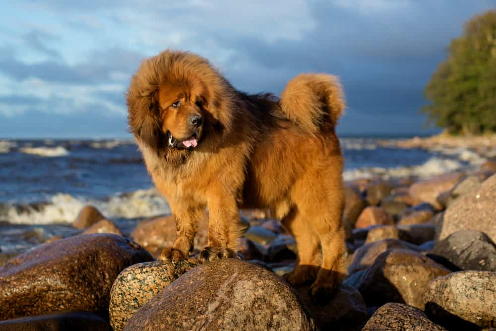dog standing near the shore