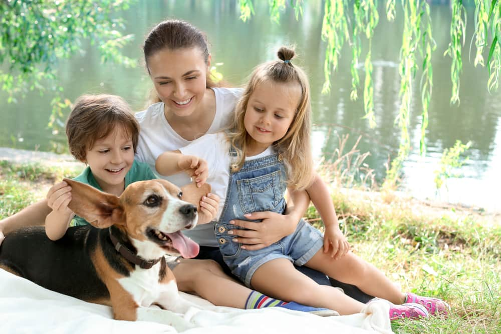 beagle with his family
