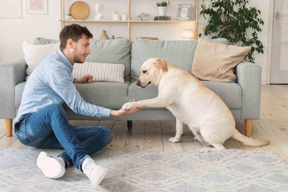 owner spending time with his dog