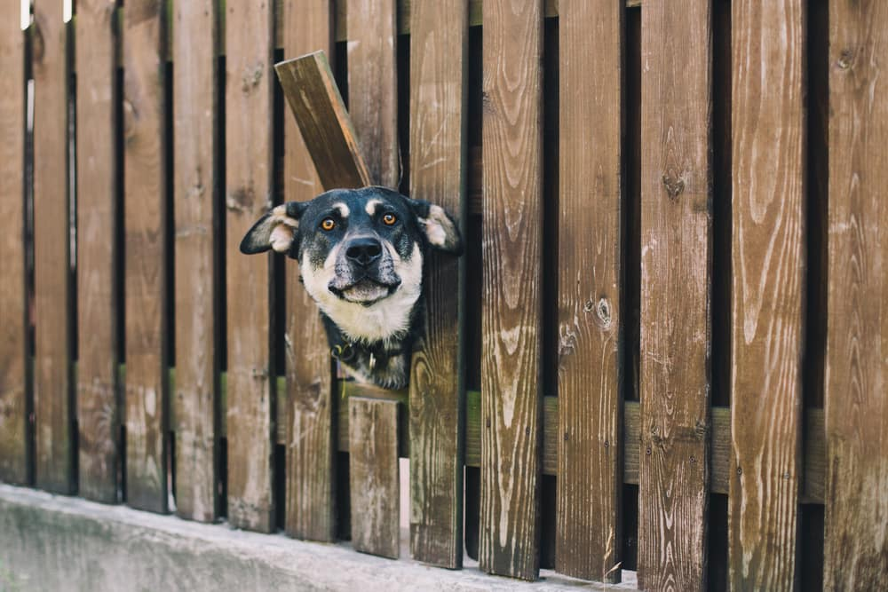 an image of a dog peeping from the fence