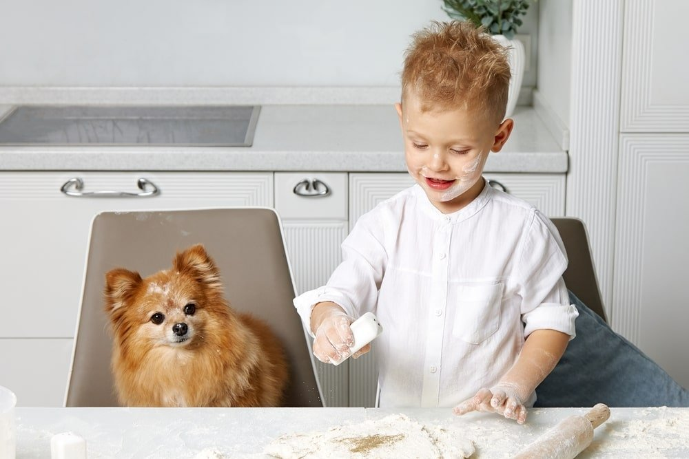 dog sitting with the kid in kitchen
