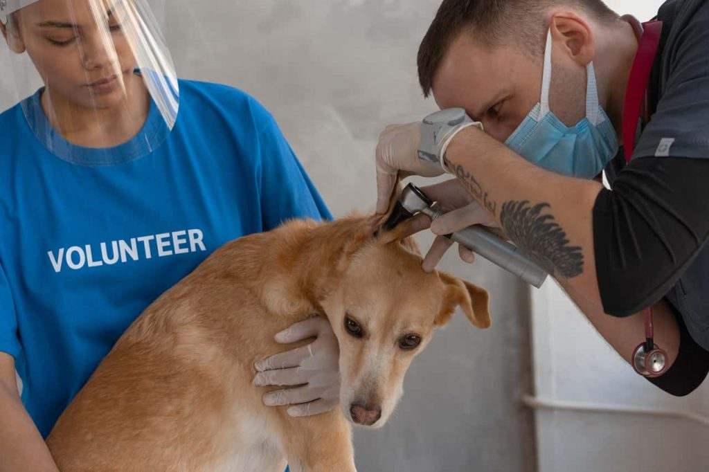 dog getting his treatment