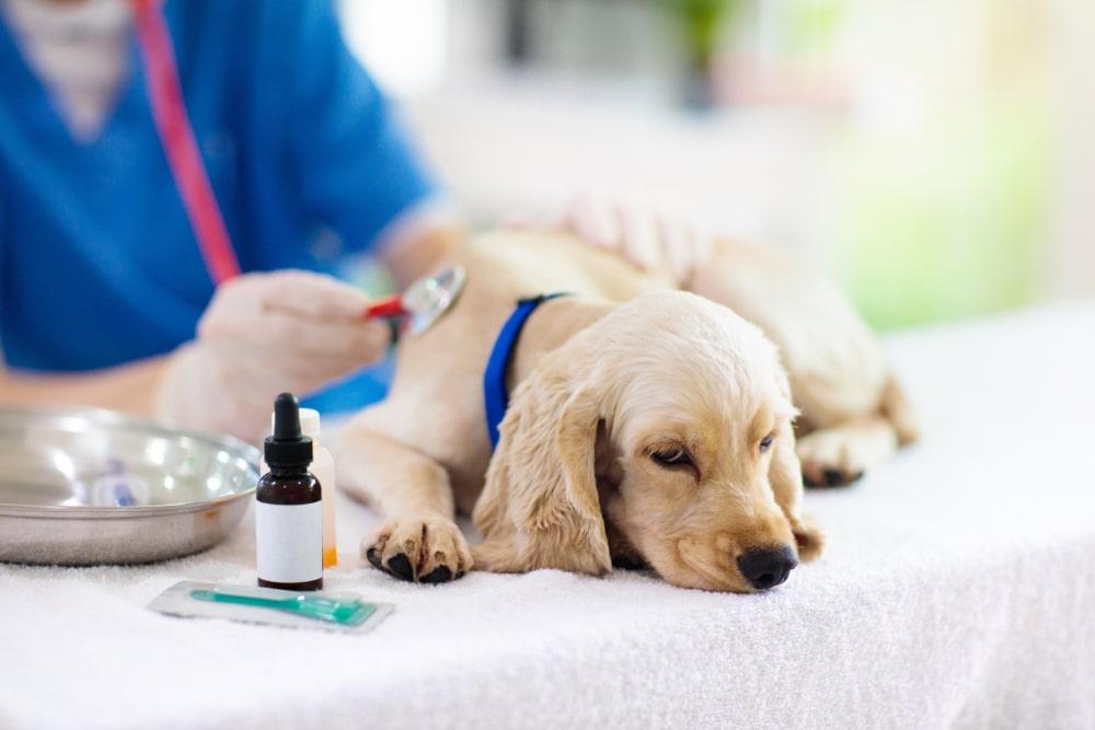 an image of a sick dog