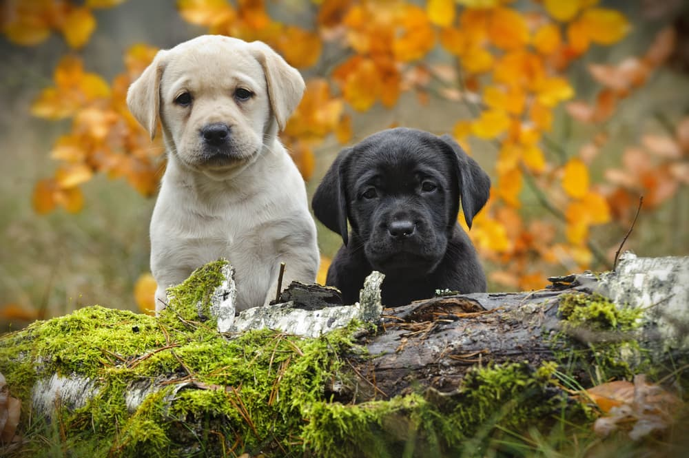 an image of two puppies